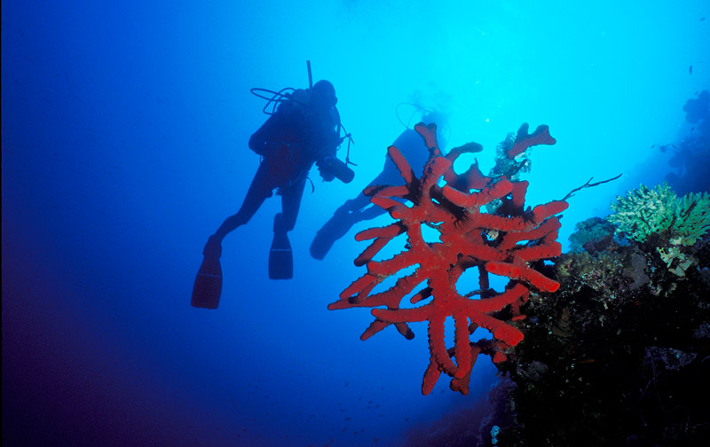 divers and red sponge